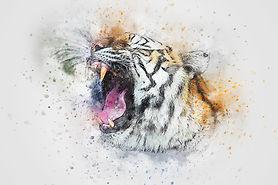 tiger-2743850_1920.jpg