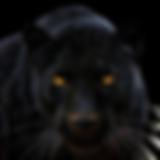 black-panther kleiner.png