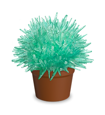 magic cactus-ocean green-01.png