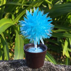 lollipop tree-blue