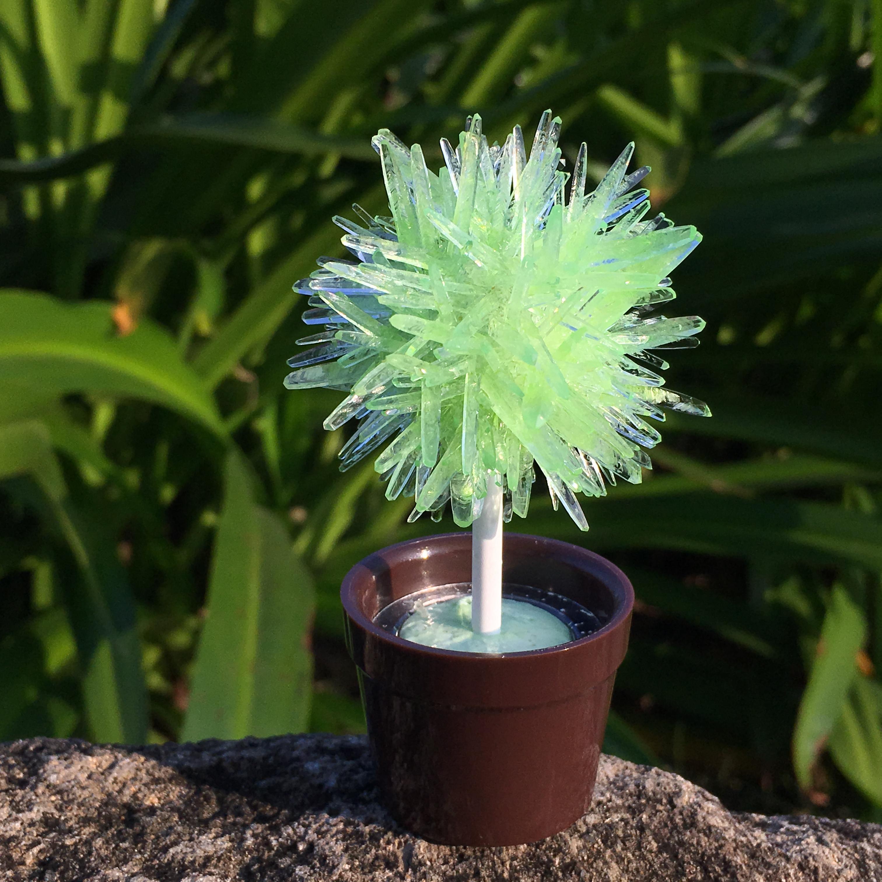 lollipop tree-apple green