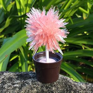 lollipop tree-red.JPG