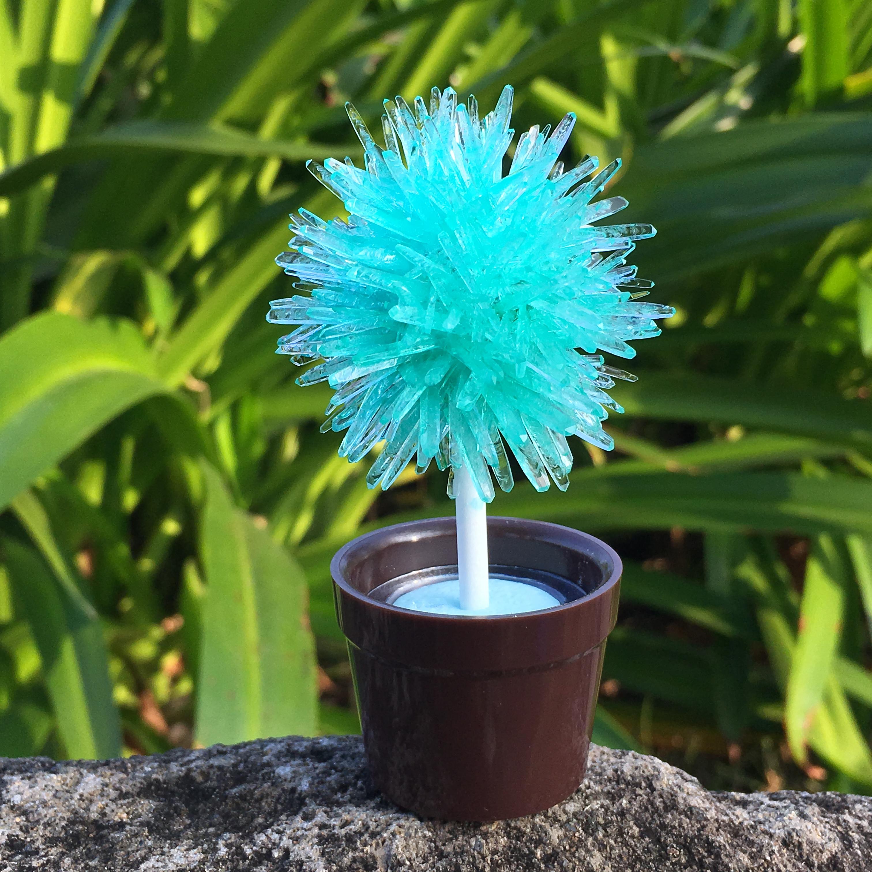 lollipop tree-sea green