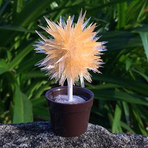 lollipop tree-orange.JPG