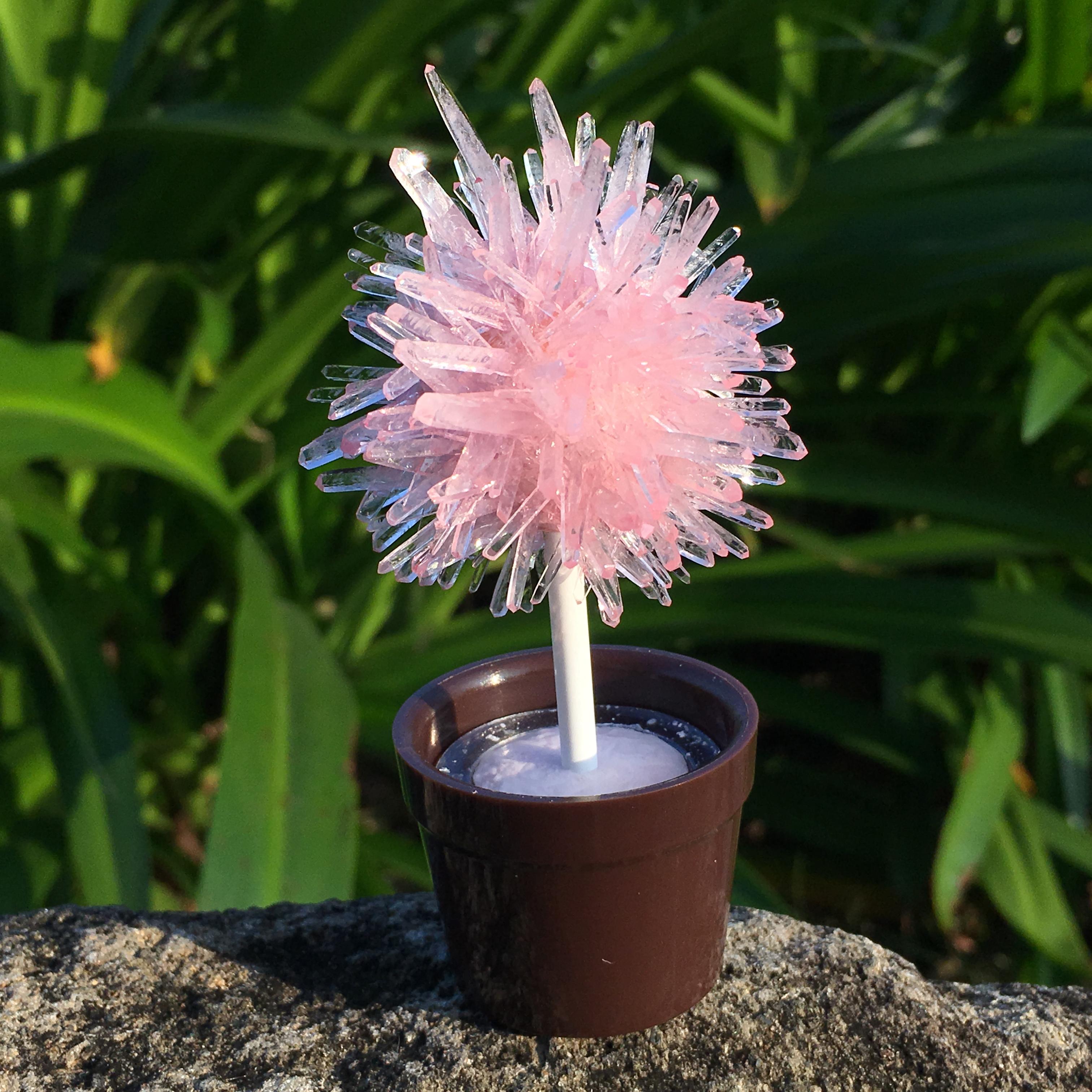 lollipop tree-pink