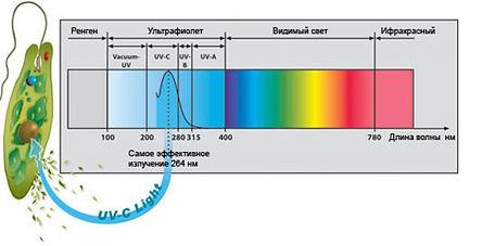 действие бактерицидных ламп