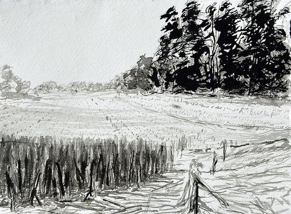 Corner Field