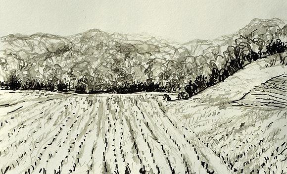 Baker's Field