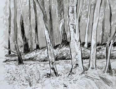 Side Woods 2