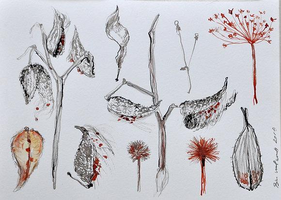 Milkweed Studies