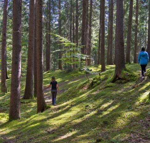 Abbracciare gli alberi per curarci dai nostri mali