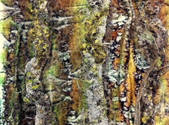 03ISuarez-HiddenForest.jpg