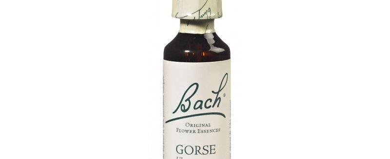 Fleur de Bach Gorse n°13 - 20 ml