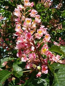 fleur n°25.jpg