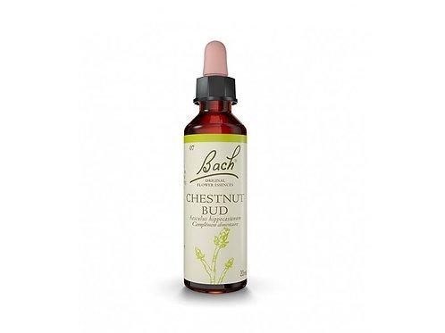 Fleur de Bach Chestnut Bud n°7 - 20 ml