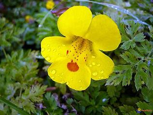 fleur n°20.jpg