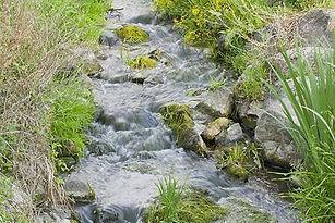fleur-de-bach-rock-water-eau-de-roche.jp