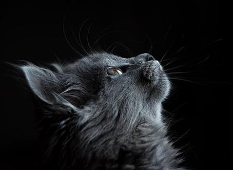 Curiosity makes the cat grow