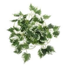 4' Strand of Green Ivy