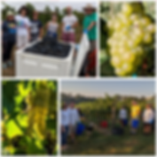 Photo Collage Maker_tFb8C9.png