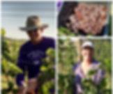 Year-2-Harvest.jpg