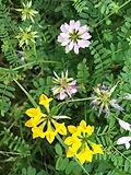 Lake Galena Wildflowers.jpg