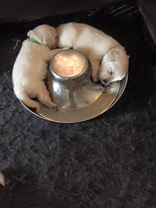 Puppies After Eating