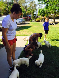 Family Play with Puppies
