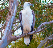Bird watching in the Twin Rivers Region, East Gippsland, Victoria