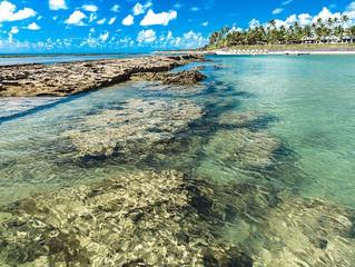 Projeto quer proibir venda de protetores solares tóxicos a recifes de corais.