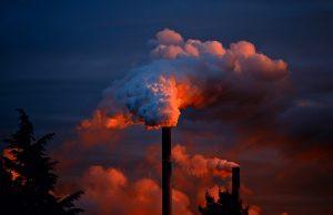 Pena para crime ambiental: quais as consequências?
