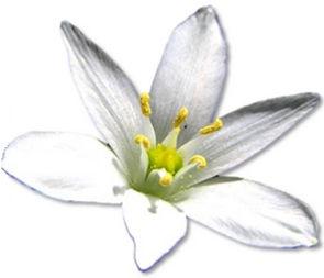 Curso Florais de Bach | BioAcupuntura