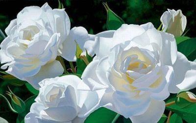 Banho de Rosa Branca - Limpeza dos pensamentos
