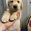 Thumbnail: Wiley (Male) Microchip# 956000013497318