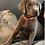 Thumbnail: Orange Collar (Male) Microchip # 956000013497145