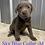 Thumbnail: Blue Collar (Male) Microchip# 956000013513109