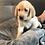 Thumbnail: Rhett (Male) Microchip# 956000013516354