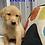 Thumbnail: Beck (Male) Microchip# 956000013513719