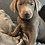 Thumbnail: Red Collar (Male) Microchip# 956000013513064