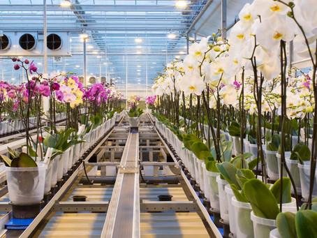 Roadshow Dutch companies to Taizhou