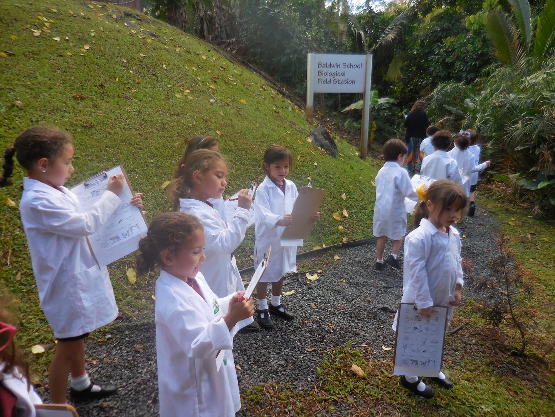 Rainforest walk in Baldwin's Biological Field Station
