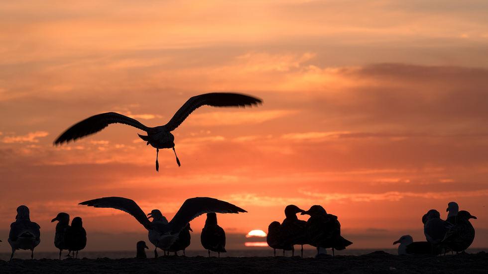 Sunset Zuma 1.jpg