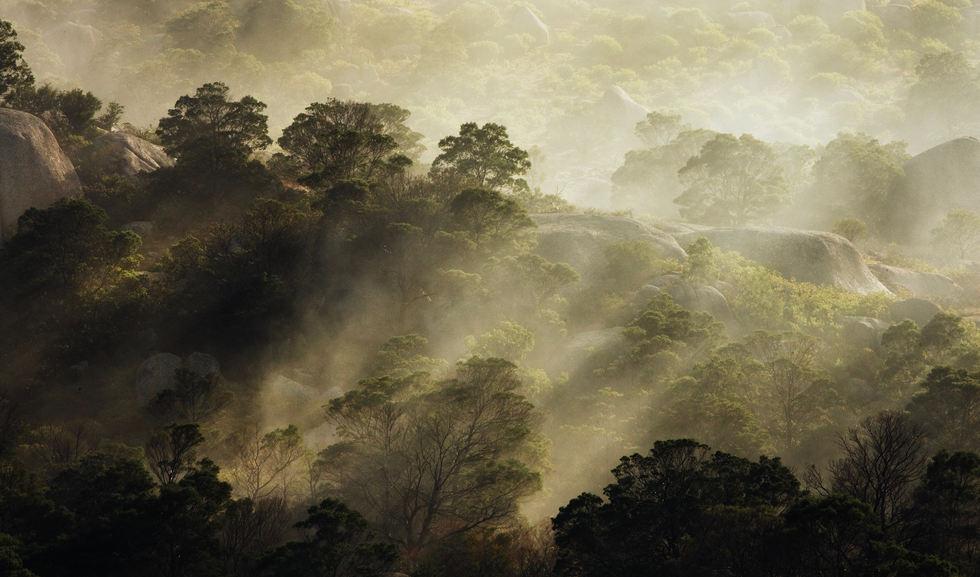 Dawn Mist Australia.jpg