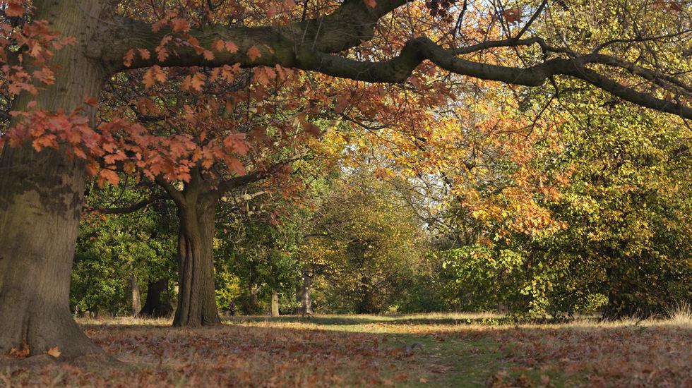 Hyde Park Fall London.JPG