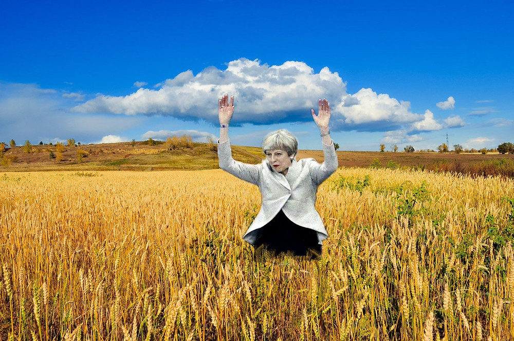 Image result for theresa may field of wheat
