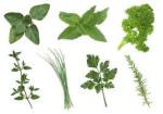 FAQ: What are Herbs?