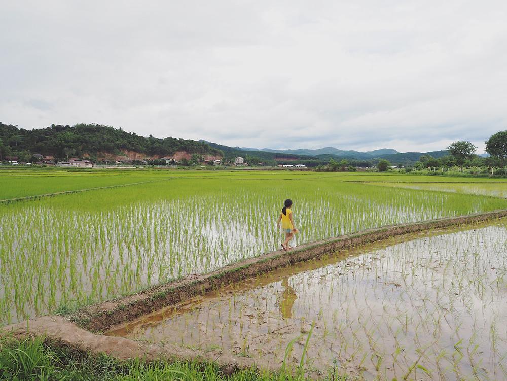 女孩在稻田中奔跑