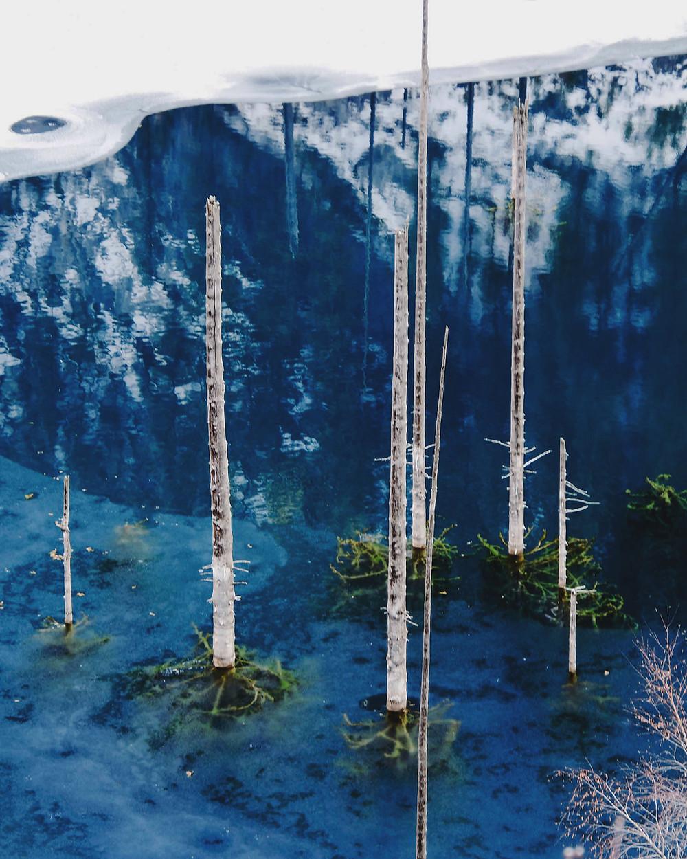 冒在湖面上的树干的镜头特写,隐约可以看见水中的针状树枝。