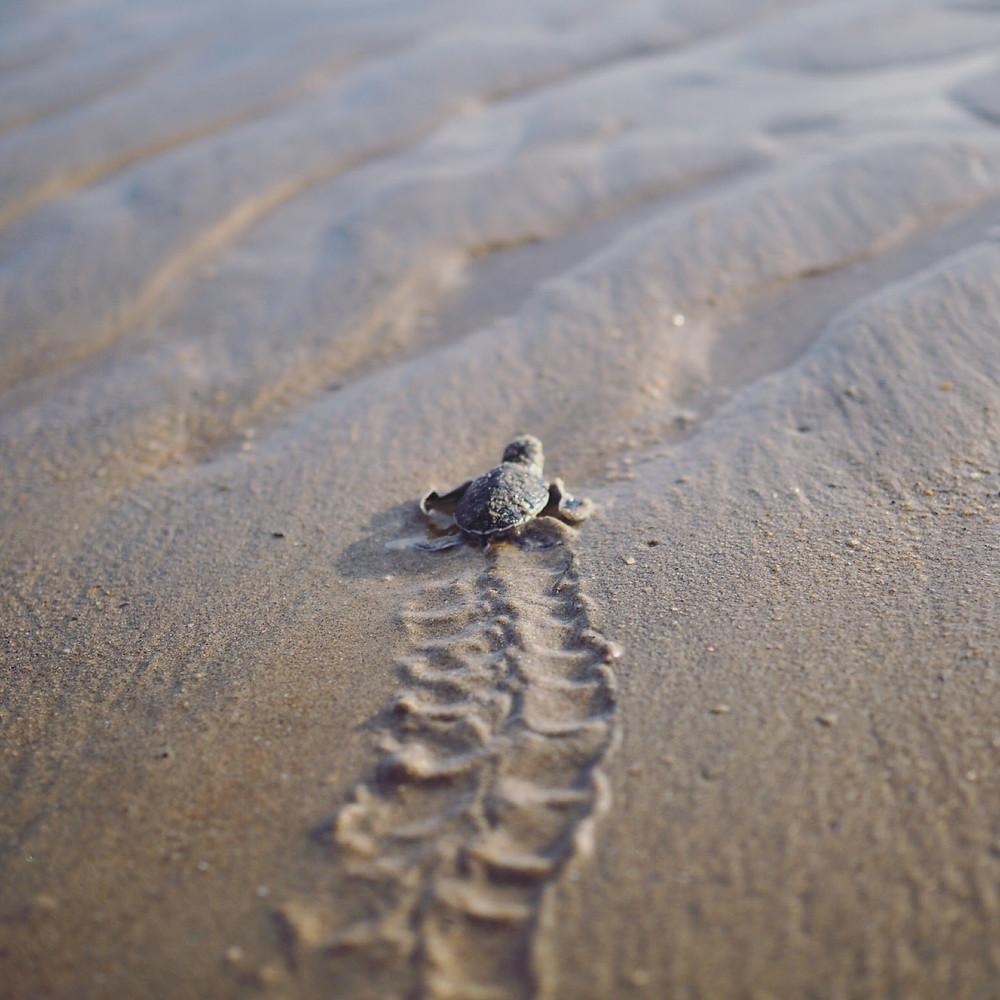 Rimbun Dahan Turtle Hatchery