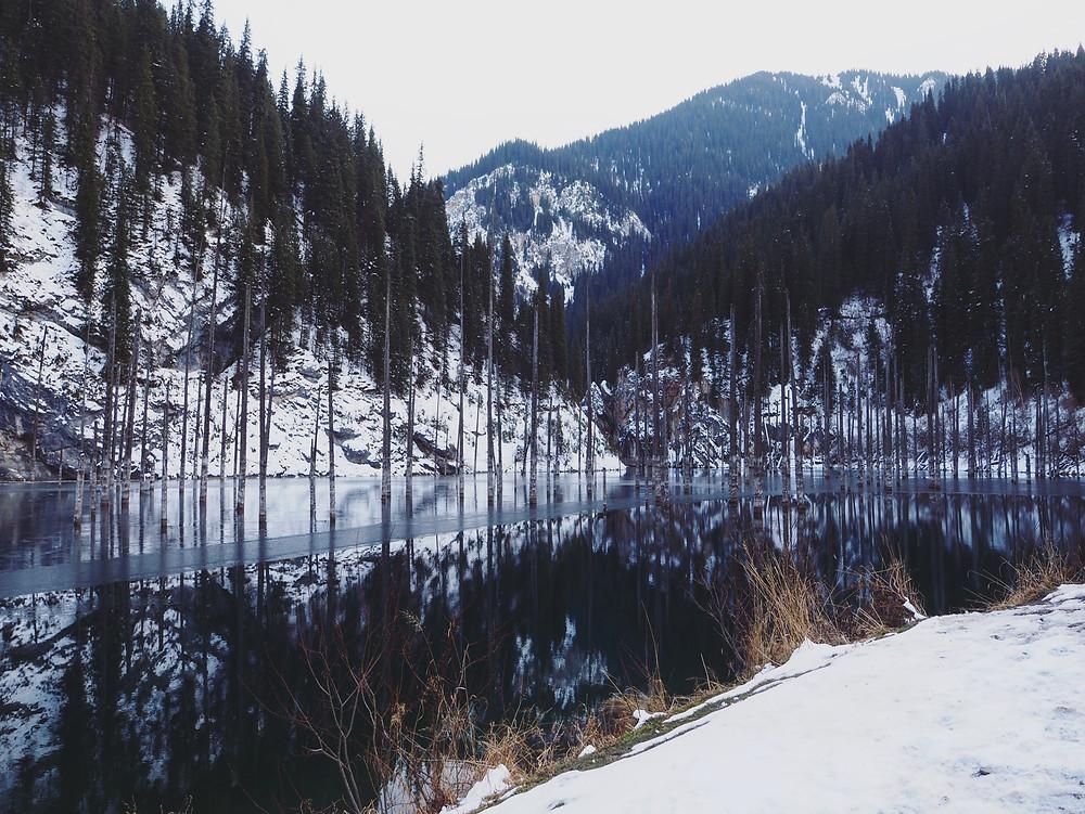 在Kaindy 的湖面上可以看见一支支的树干。